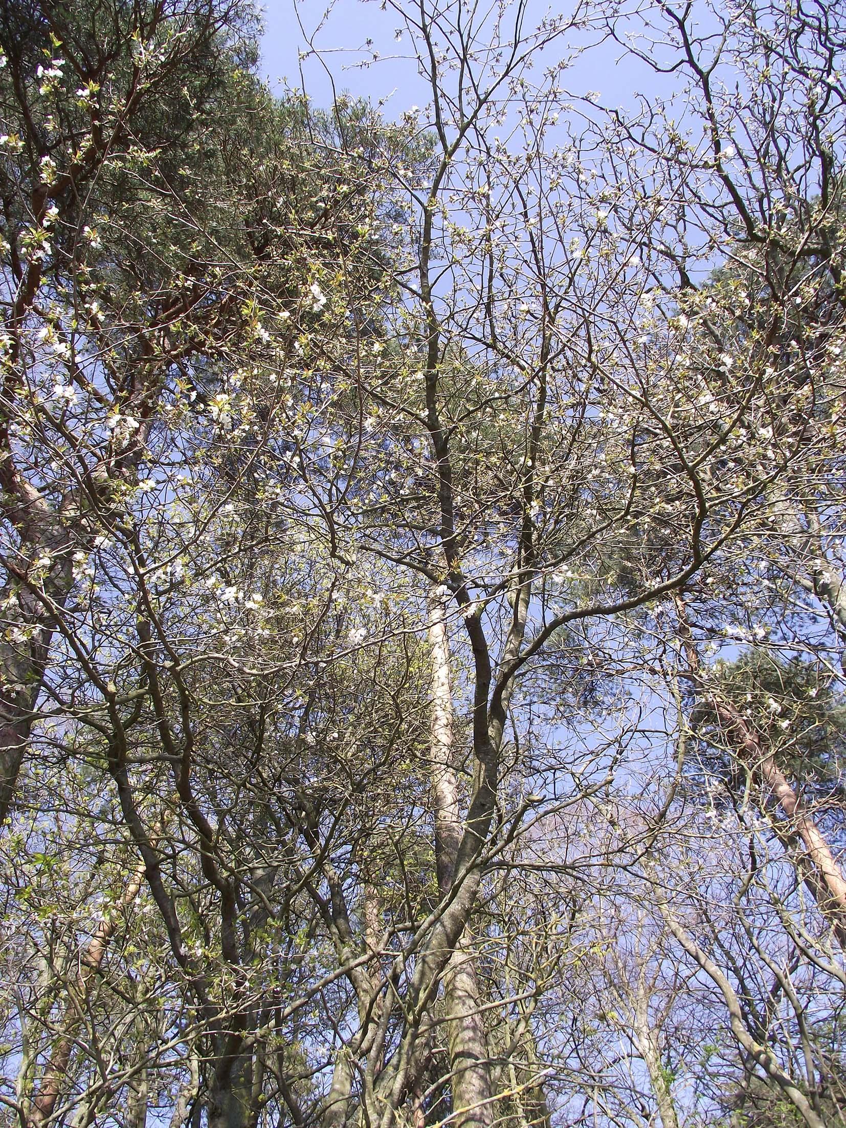 april trees 2ok